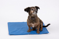 Comfort cooling mat for dogs - blue